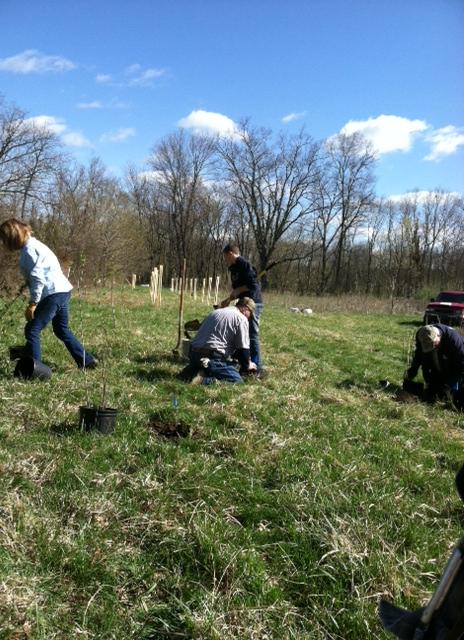 BSA planting trees 4-13-13